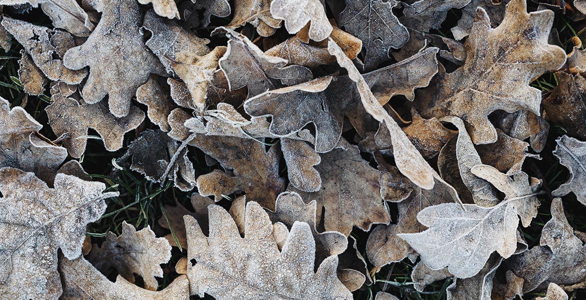 piel más hidratada invierno